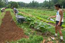 UVA students working in the Kitchen Garden at Morven Farm