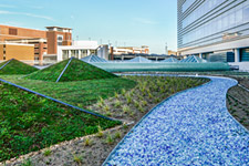 UVA Hospital's new green roof