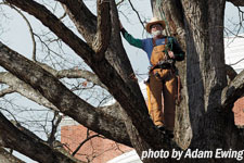 Jerry Brown poses standing in a tree