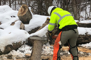 A Facilities Management landscaper cutting a tree stump with a chainsaw