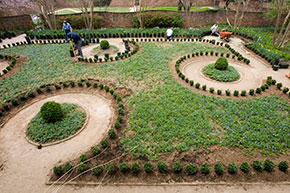 Landscape employees plant boxwoods in Jeffersonian garden