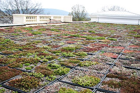 Rouss Hall green roof